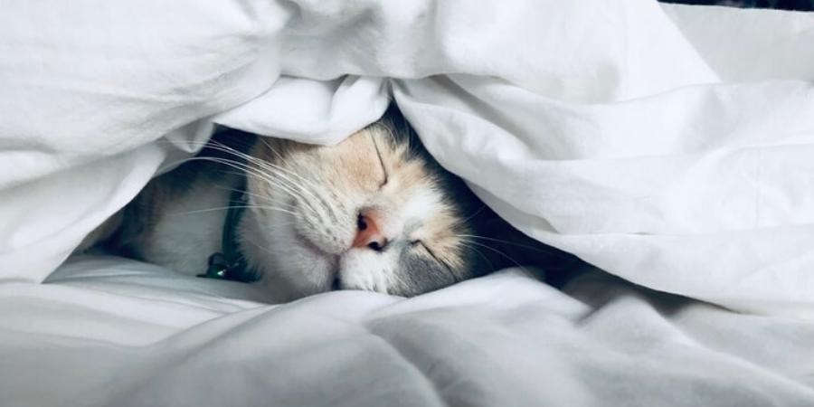 Ha kis kedvencünk sűrűn jöhet fel az ágyba
